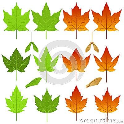 De bladeren van de esdoorn
