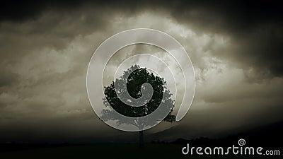 De bliksem brandt boom