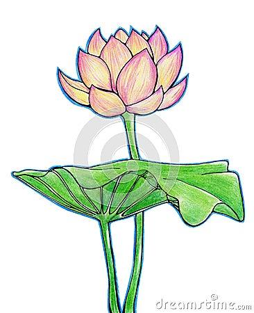 De bloem en het blad van Lotus
