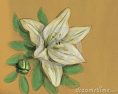 De bloem van de iris - potloodschets