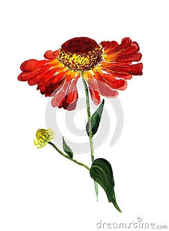 De bloem van de kegel