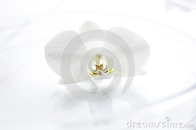De bloem van de orchidee op het water