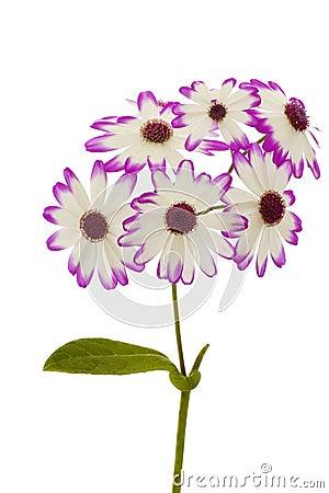 De bloem van het onkruid