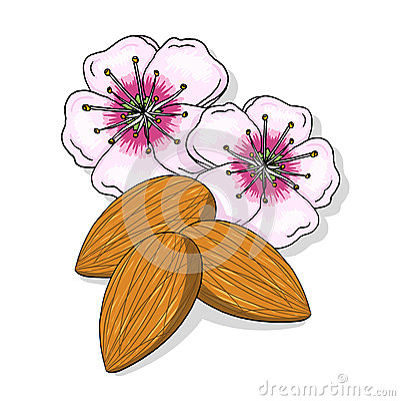 De bloemen en de notenillustratie van de amandel