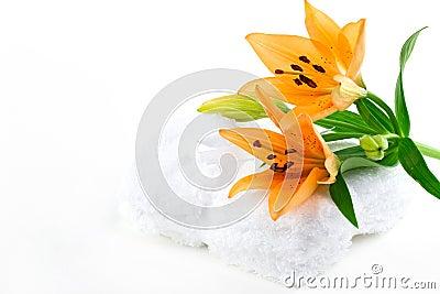 De bloemen van de lelie op tawels