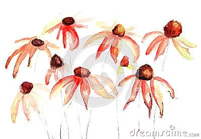 De bloemen van de zomer, waterverfbloemen