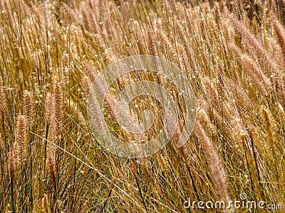 De bloemen van het gras