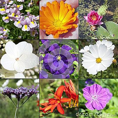 De bloemeninzameling van de zomer