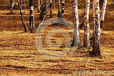 De bomen in de herfst