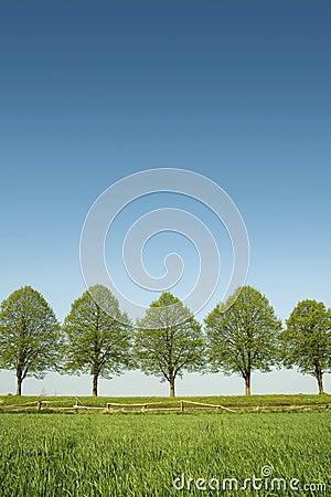 De bomen van de lente