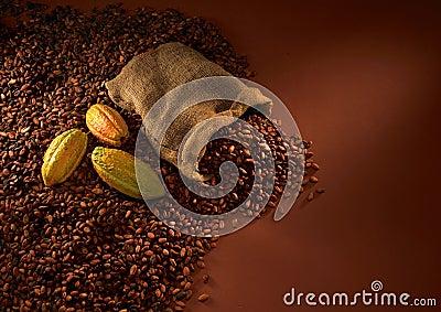 De bonen van de chocolade