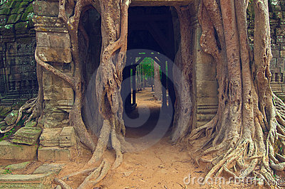 De boom van Banyan over de deur van Som van Ta. Angkor Wat