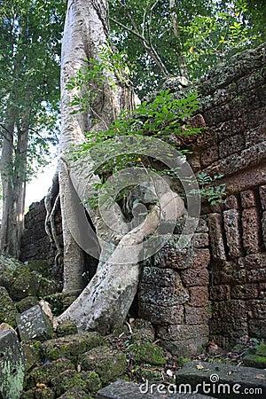 De boom van Boddha