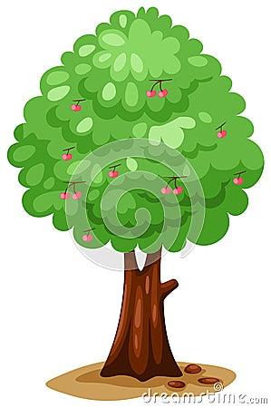De boom van de kers