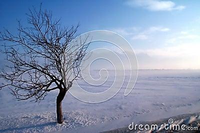 De boom van de krab op een de winteronweer