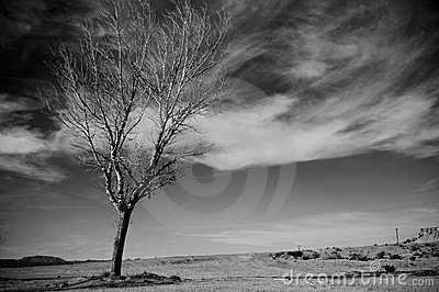 De boom van de woestijn