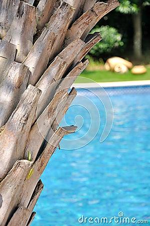 De boom van Plam en zwembad