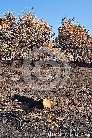 De boomstam van de brandwond uit boom