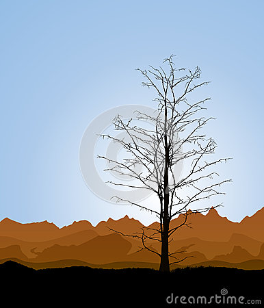 De boomstam van de boom