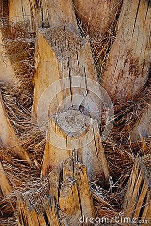 De boomstam van de palm