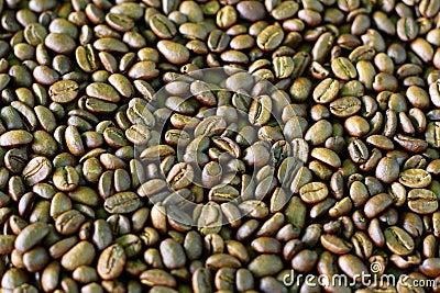 De boonpatroon van de koffie