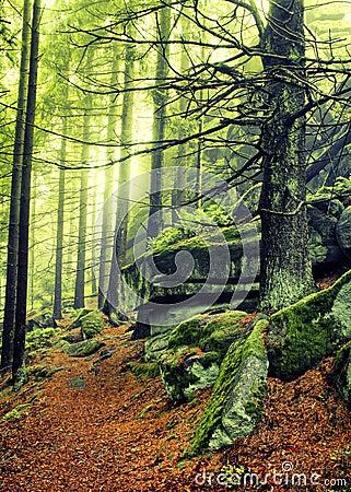 De bosweg van de herfst
