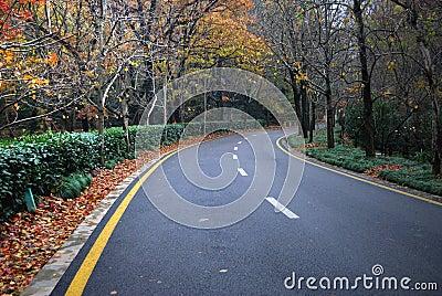 De bosweg van de herfst in het hout