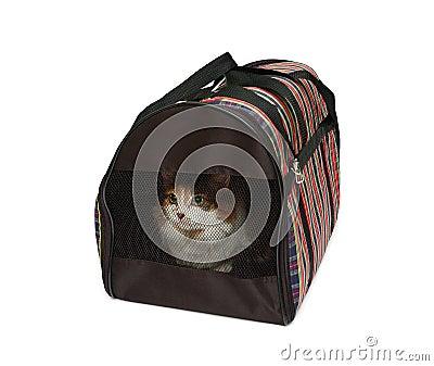 De carrier van het huisdier met kat
