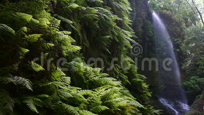 ` De cascade le ` de tilleuls, en île de La Palma, les Îles Canaries, Espagne banque de vidéos