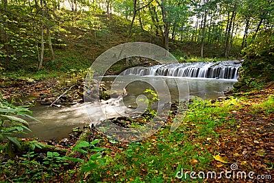 De cascades van de kreek in Pools bos