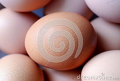 De Close-up van het bruine Ei