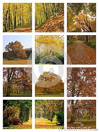 De collage van de herfst