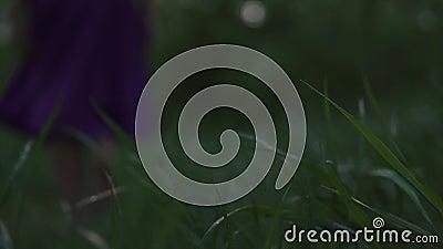 De dauw op het gras door naakt been van vrouw wordt gelaten vallen loopt blootvoets in het hout in een purpere rok in schemeringt stock footage
