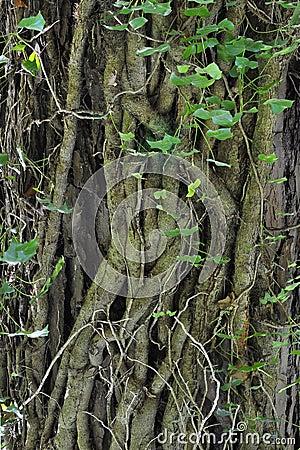 De details van de boomstam