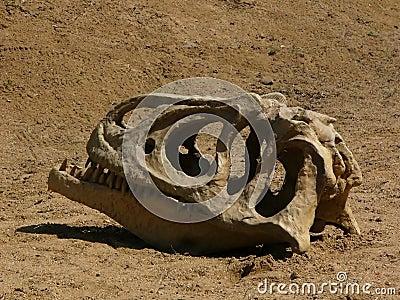 De dinosaurus van de schedel