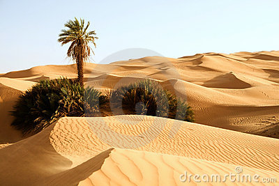 De duinen van het zand met één palm â Awbari, Libië