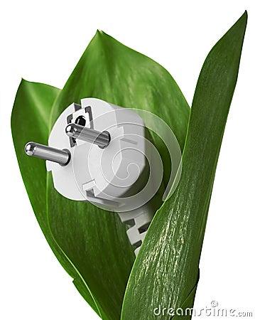 De energie van Eco