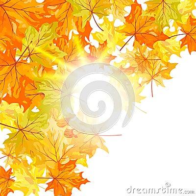 De esdoorn van de herfst