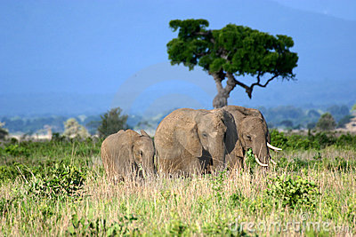 De Familie van de olifant op de Afrikaanse Vlaktes