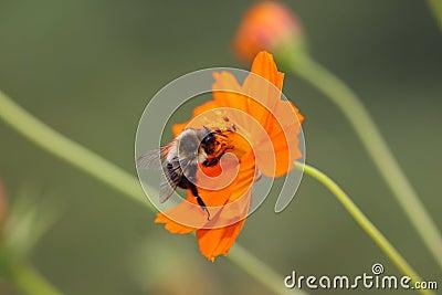 De fauna van de flora