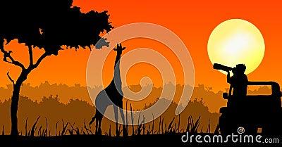 De fotograaf van het wild in zonsondergang