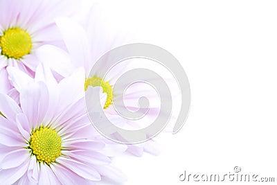 De grens van bloemen