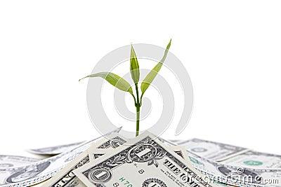 De groei van het geld
