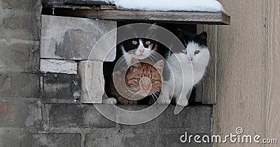 De groep dakloze katten verwarmt in een gat in de winter stock videobeelden
