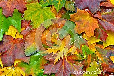 De groeten van de herfst