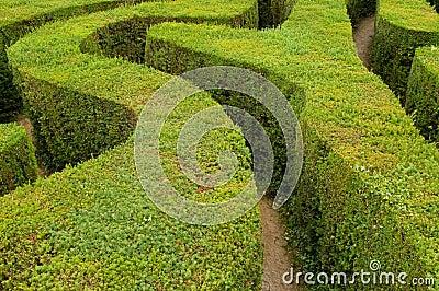 de hagen van het labyrint royalty vrije stock foto afbeelding 10794065. Black Bedroom Furniture Sets. Home Design Ideas