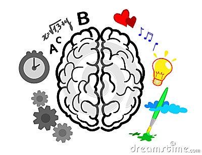 De hemisferen van hersenen