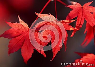 De herfst