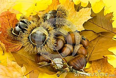 De herfstdecoratie met doorbladert kastanjes en eikel for Herfst decoratie