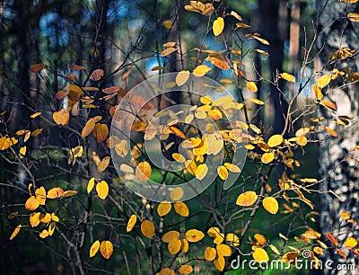 De herfstachtergrond